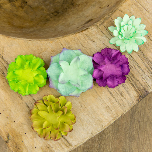 Seed paper flowers succulent naturally curated seed paper flowers succulent mightylinksfo