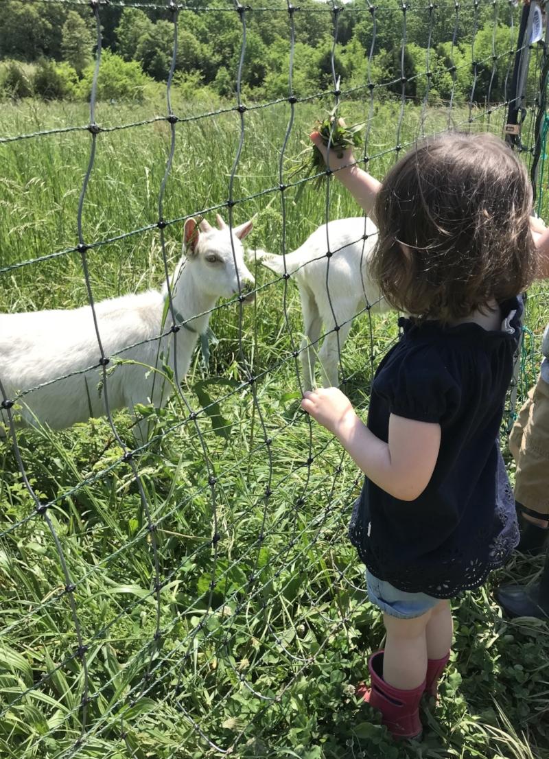 LSF feeding goats.jpg