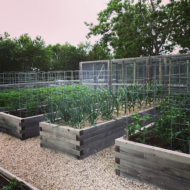 #raisedbeds on lock. #certifiedorganic #organic #farmtotable #farm2table #nofo #hamptons #freshleecut #sangleefarms #local #sustainable #homegarden #homegrown #garden #ediblegarden #chefsgarden #vegetablegarden
