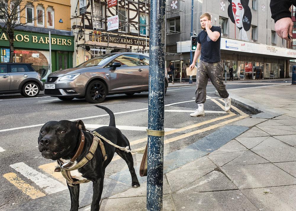dog-high-street.jpg