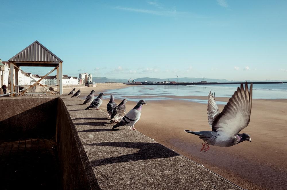pigeon-line-swansea-bay.jpg