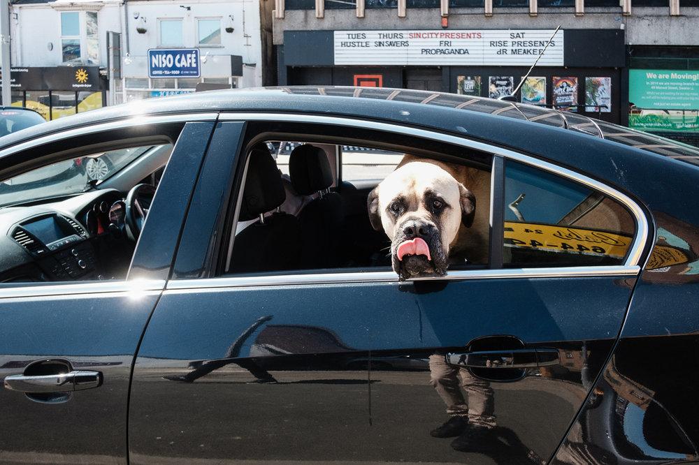 swansea-black-car-tongue-dog.jpg