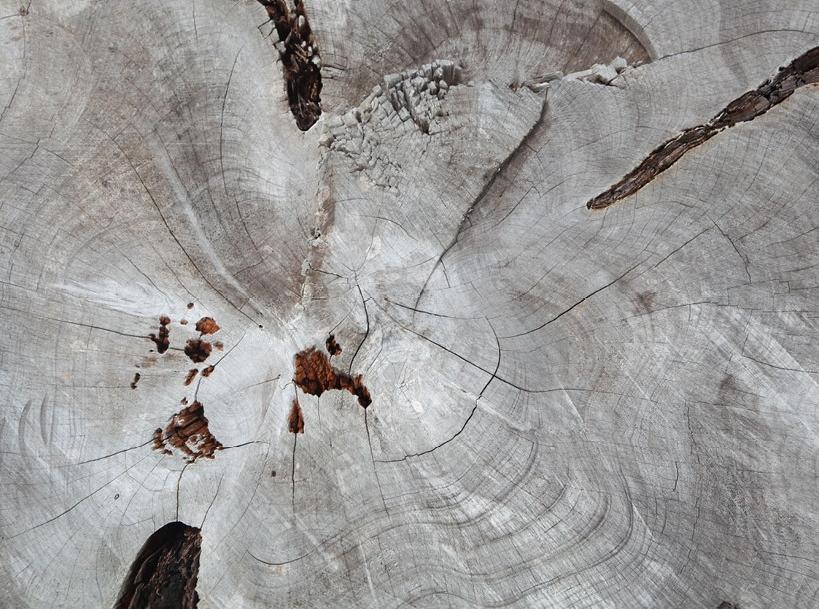 tree rings partimi