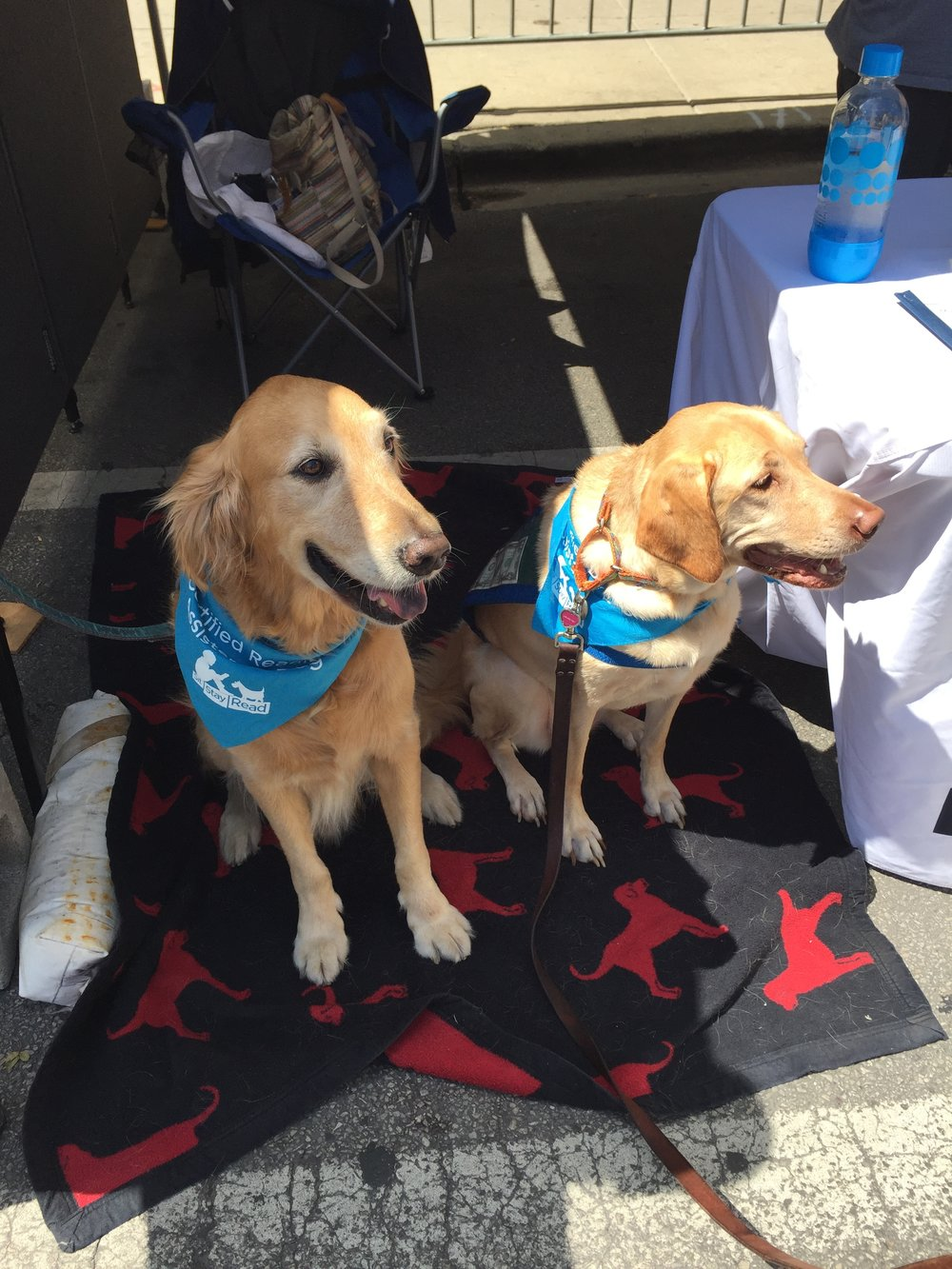 Certified Reading Assistance Dogs Riley and Maggie wait for passersby to give them pets and dollars! (V. Luisi)