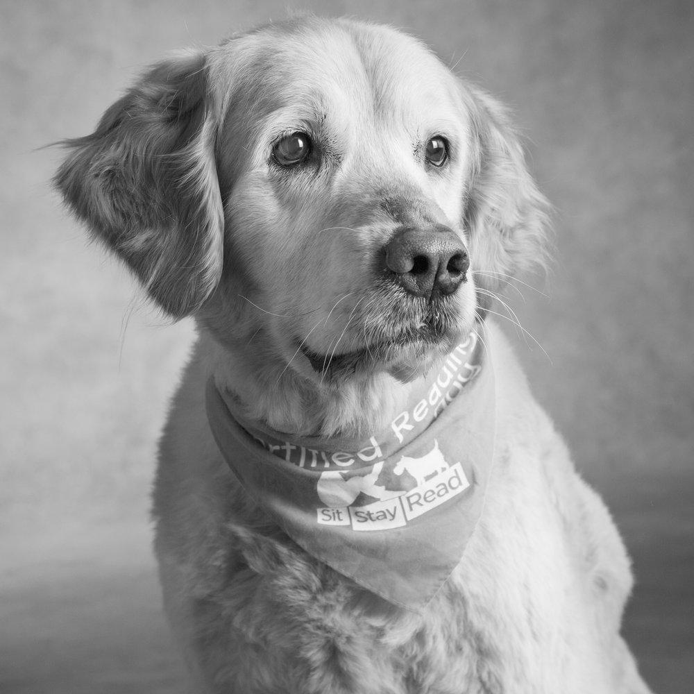Daisy Graham Dog of the Year 2018.jpg