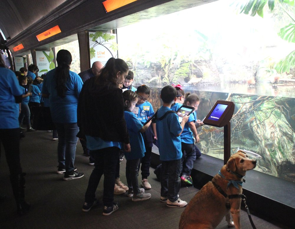 Funston Elementary students studying animals in their habitat