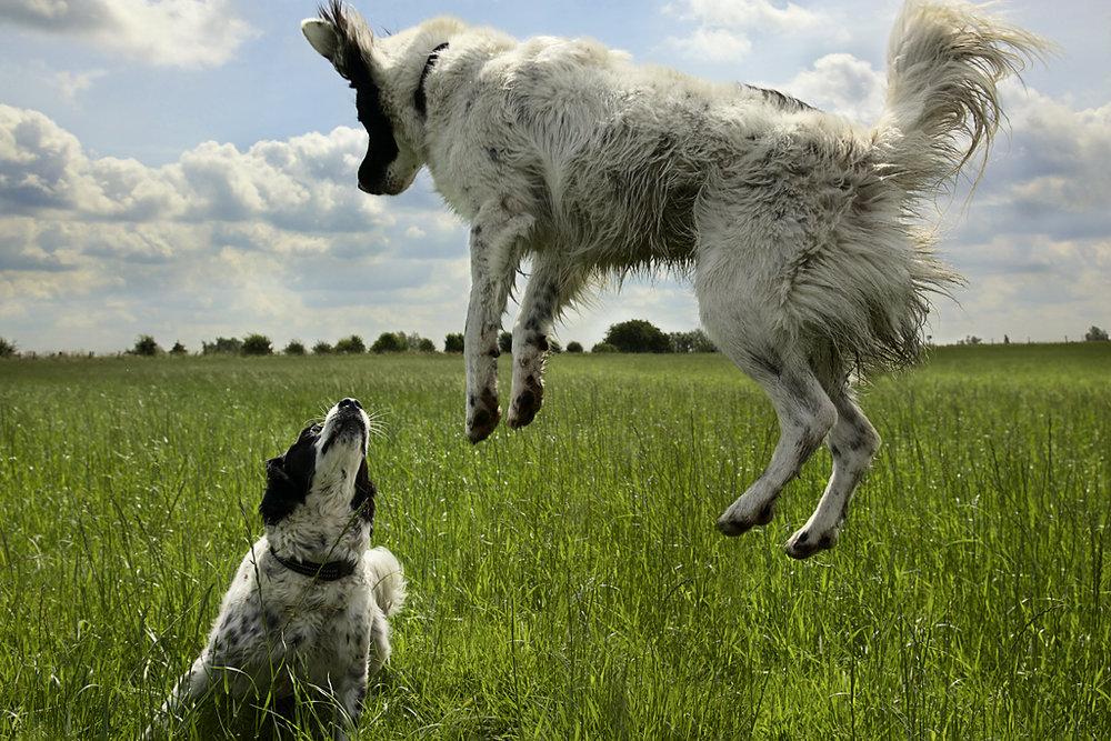 SheepDogs.jpg