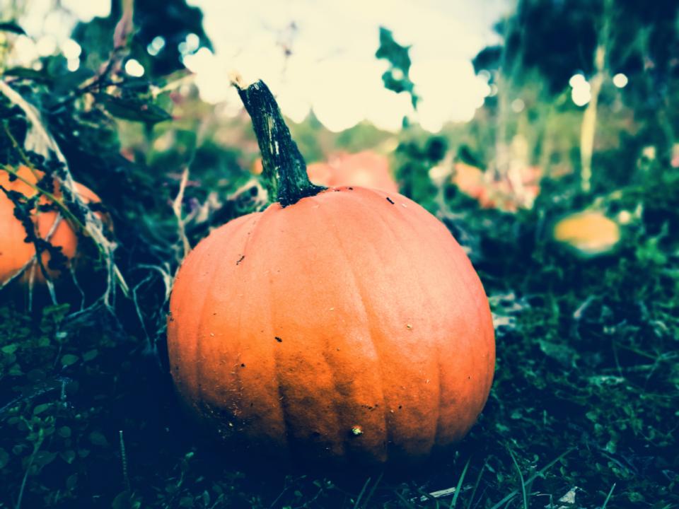 halloweens4.jpg
