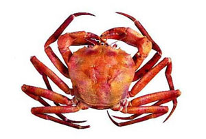 Atlantic deep-sea red crab supplemental information report (2016) (Photo courtesy of NMFS)