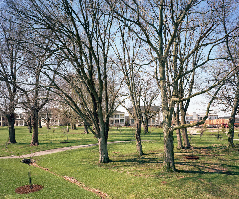 Preserved Tree Grove, Norton Commons – South Village, Louisville, KY. 2015