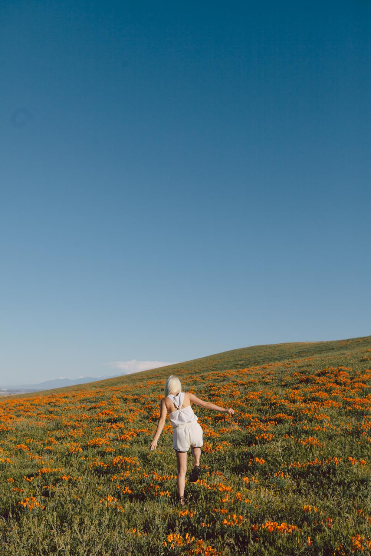 Poppys_001.jpg