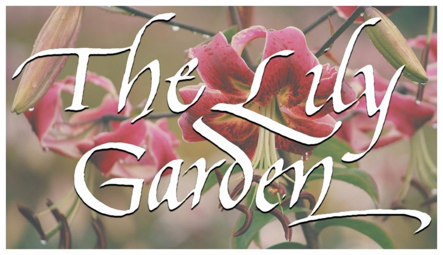 The Lily Garden