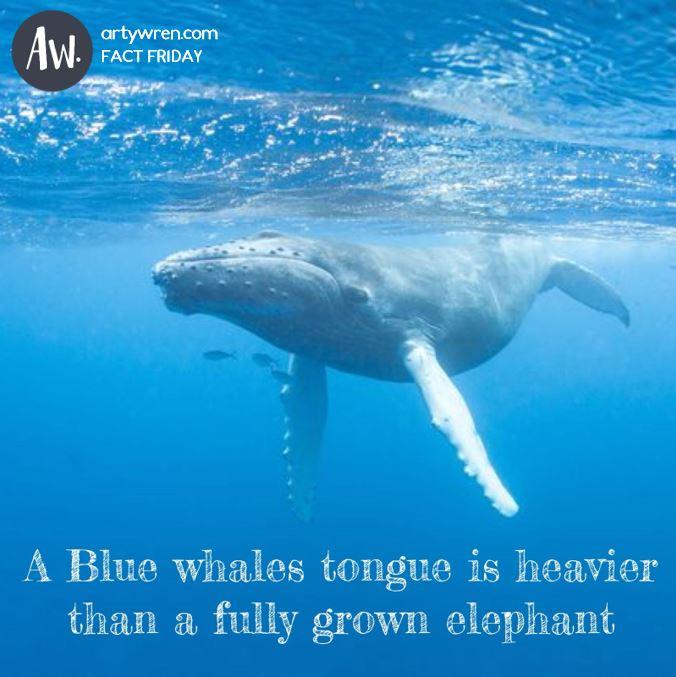 Fact Friday_Ocean_Blue Whale.JPG