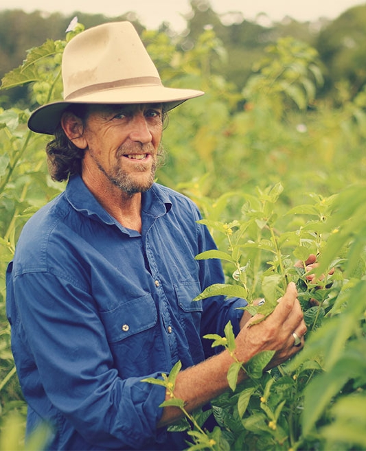 Geoff Lawton - Upon Mollison's retirement, Geoff was tasked with creating a new Permaculture Research Institute.