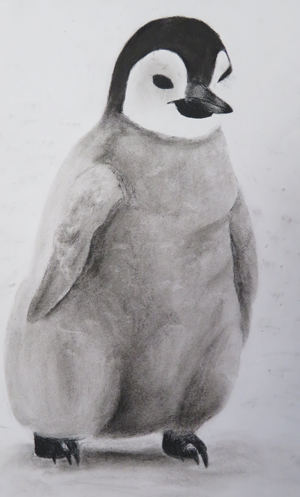 Penguin charcoal drawing by Ankita, age 14
