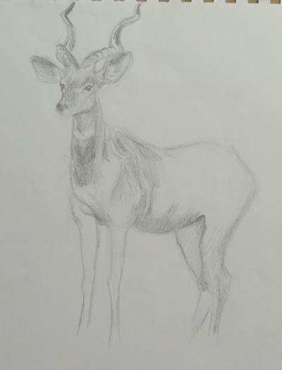 drawing of deer