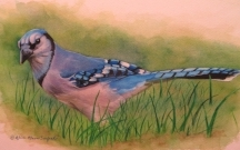 """ALICE OLSON SEUFERT: Original W/C & Colored Pencil  """"Elusive Blue"""" Please inquire for a PRICE on this painting via our   Contact Page or 215 547-6547"""