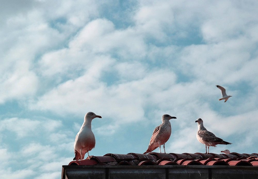 The seagulls of Istanbul
