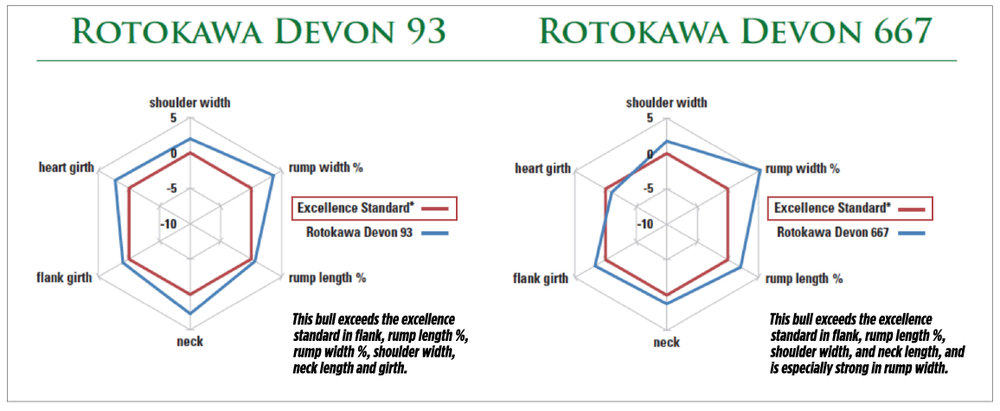 RotakawaSpiderdiagram.jpg