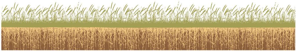 logo grass roots.jpg