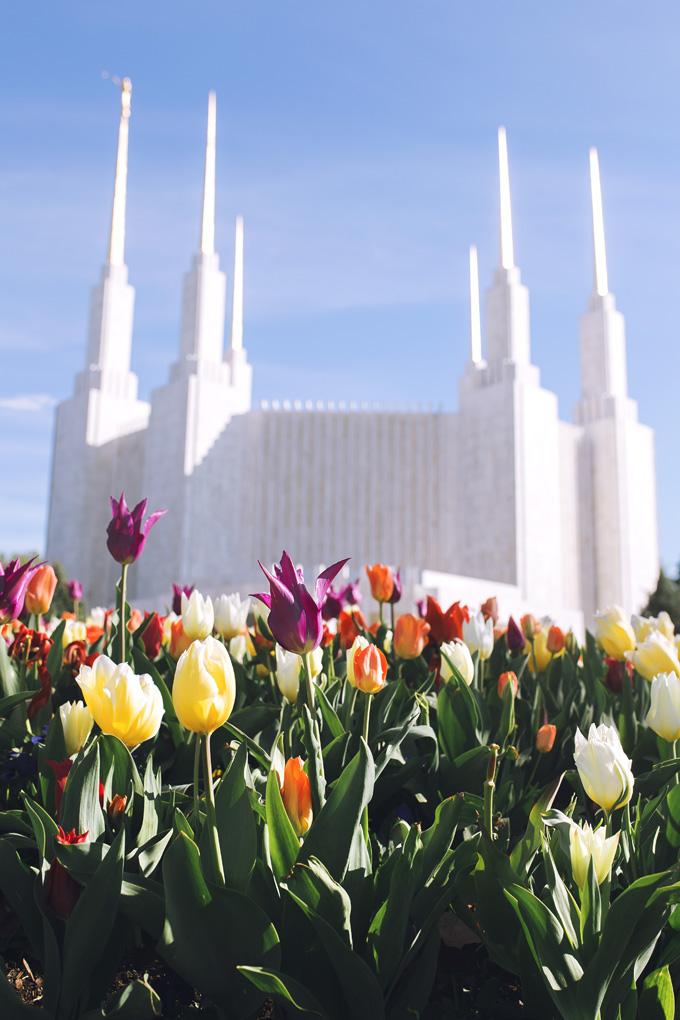 DC-Temple-Flowers.jpg