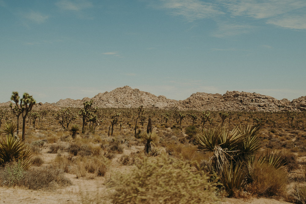 Joshua-Tree-National-Park-27.jpg