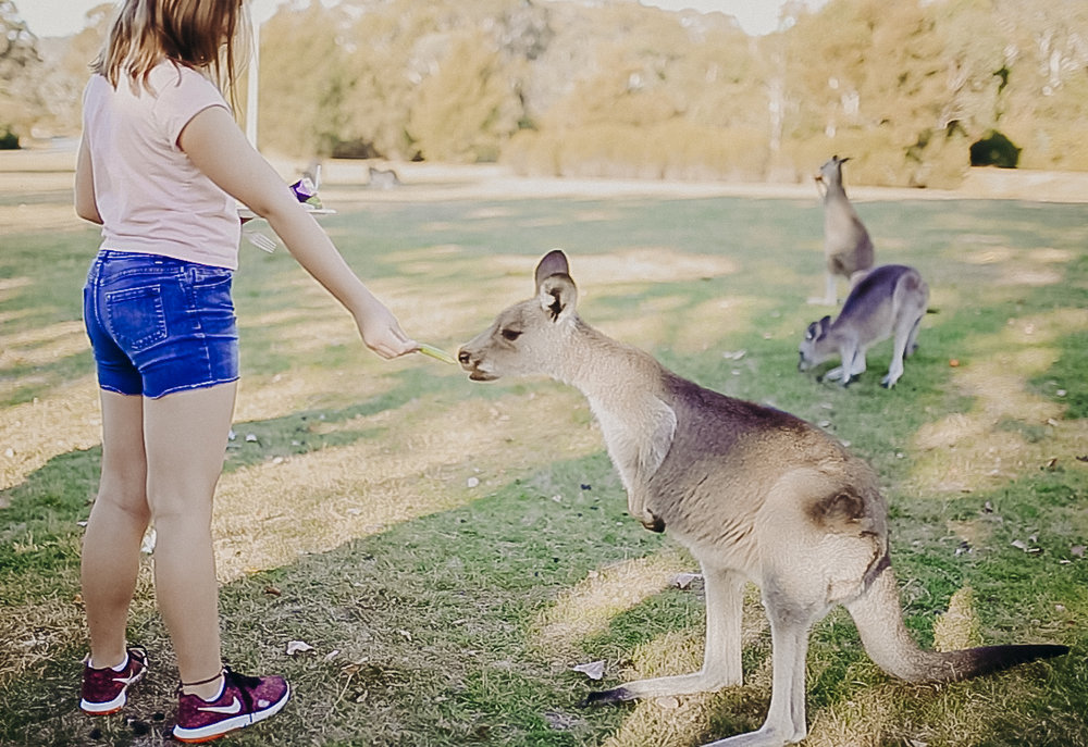 Canberra-Australia-Things-To-Do-7.jpg