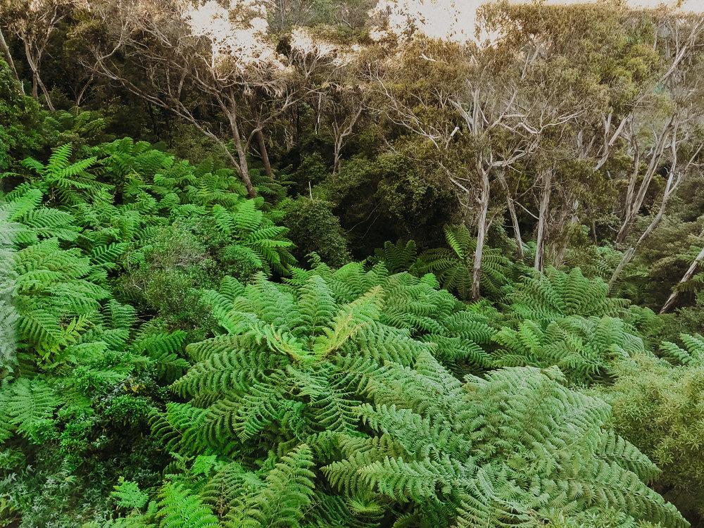 scenic-world-national-park-sydney-australia-blue-mountains-19.jpg