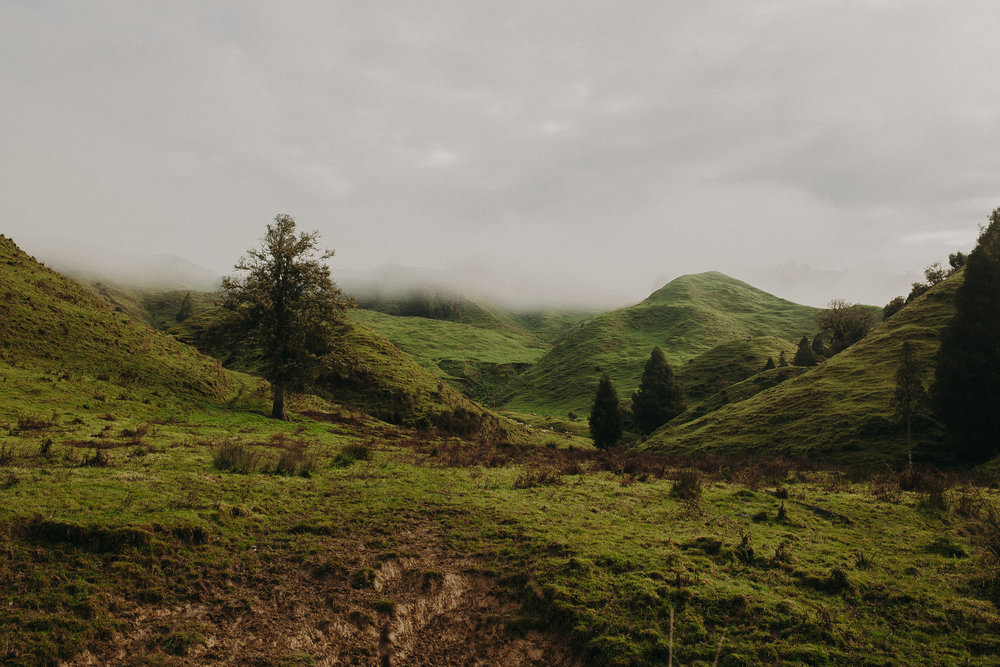 Forgotten-World-Highway-New-Zealand-2.jpg