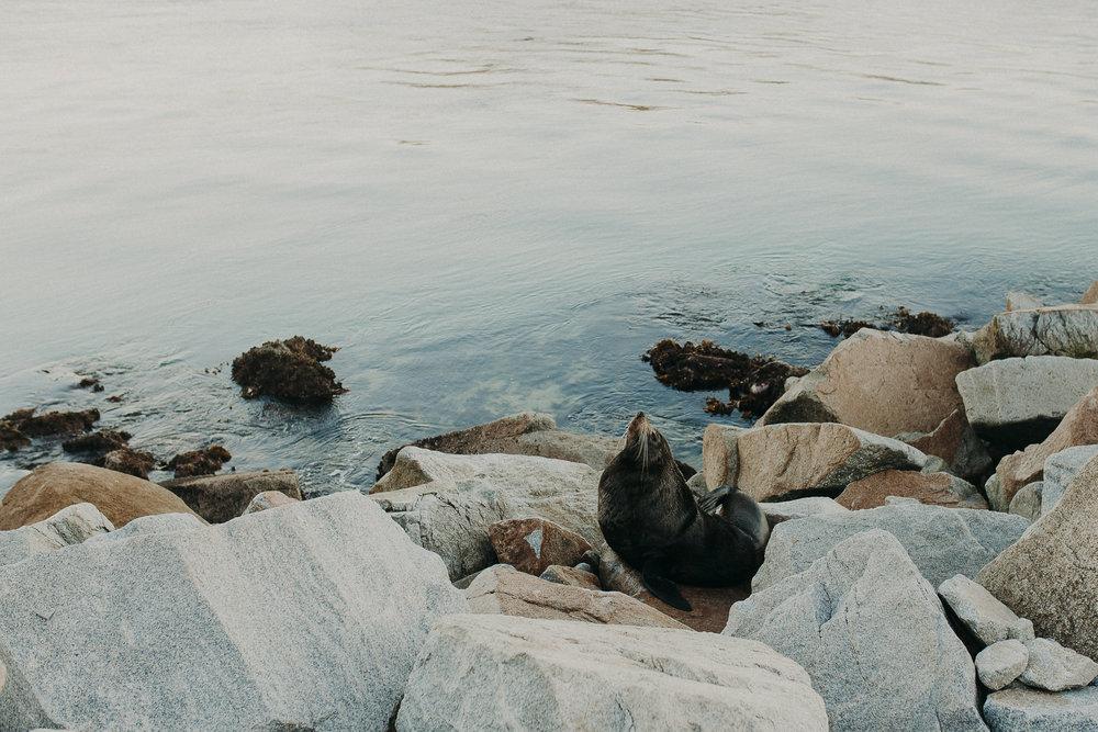 Narooma-Australia-Rock-Horse-Head-Rock-9.jpg