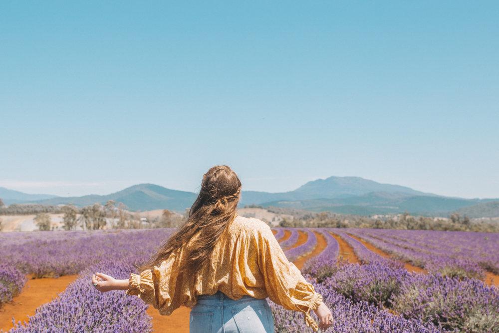 bridstowe lavender fields mt paris damn tasmania-3.jpg