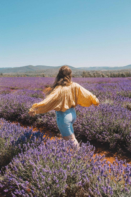 bridstowe lavender fields mt paris damn tasmania-6.jpg