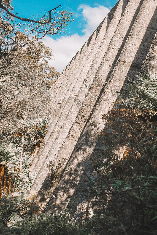 bridstowe lavender fields mt paris damn tasmania-10-resized.jpg