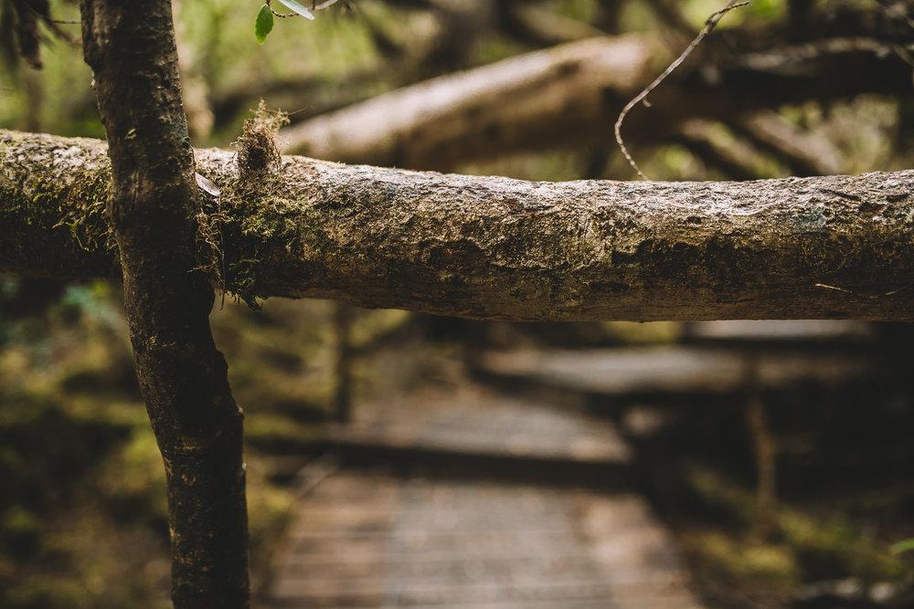 The Needles Hike in Southwest National Park Tasmania-15.jpg