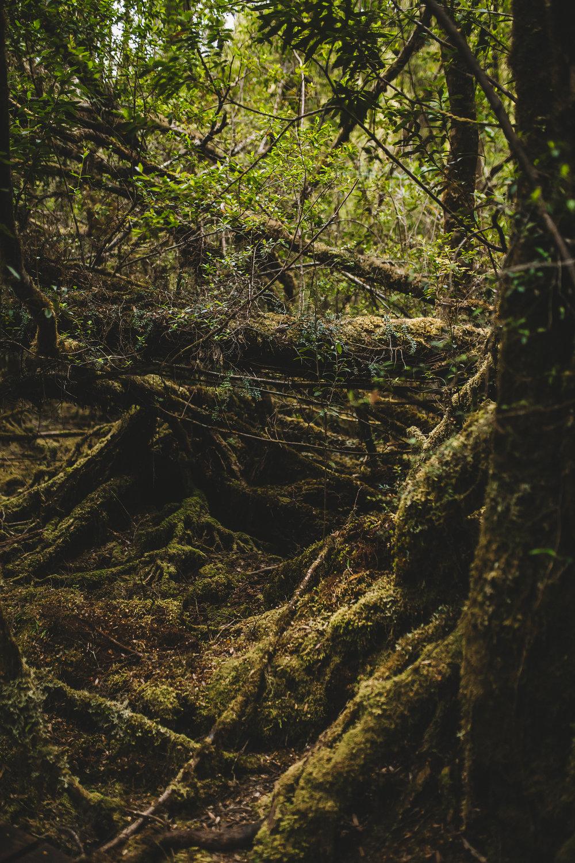 The Needles Hike in Southwest National Park Tasmania-16.jpg