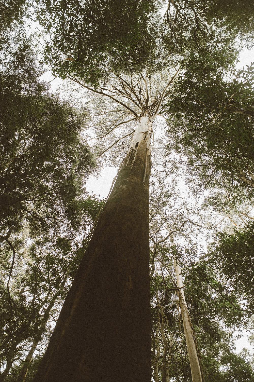 tasmania southwest national park mountains-7resized.jpg
