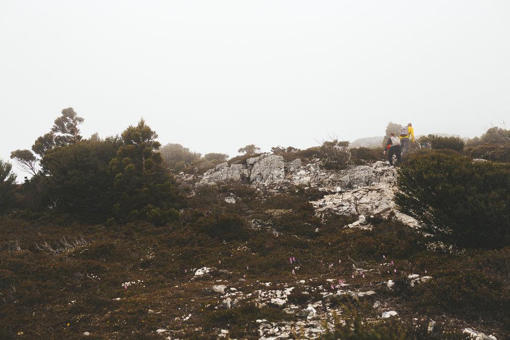 cradle mountain summit hike review tasmania-7.jpg