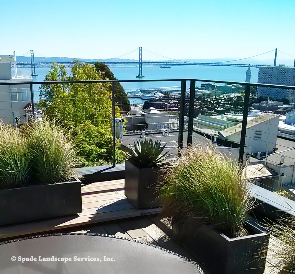 Bay Bridge View Container Garden