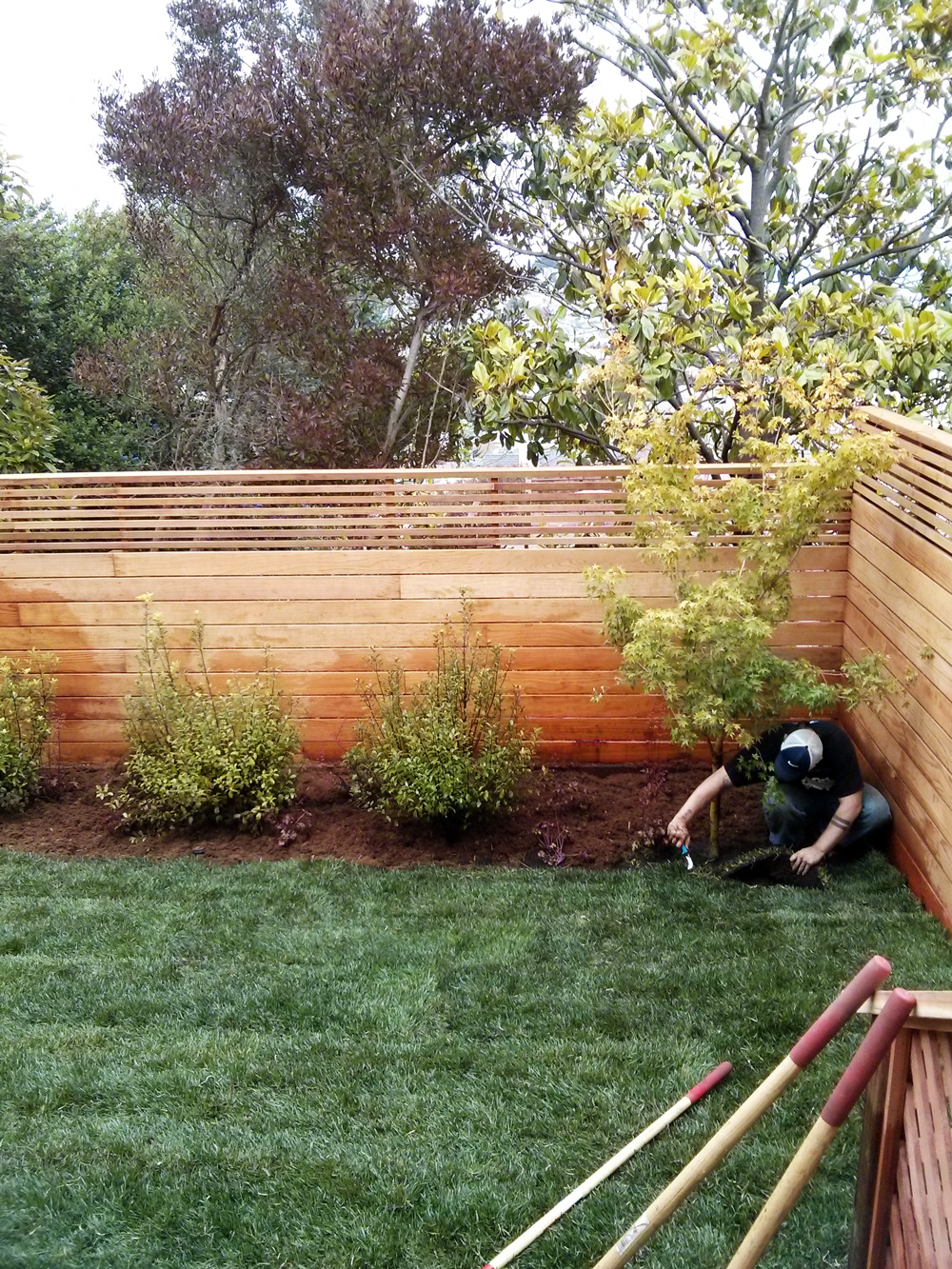 Backyard-Renovation.jpg