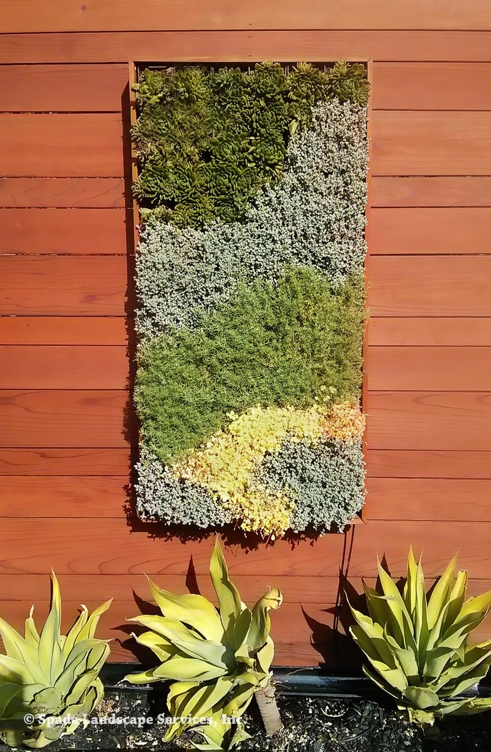 Multi Succulent Living Wall
