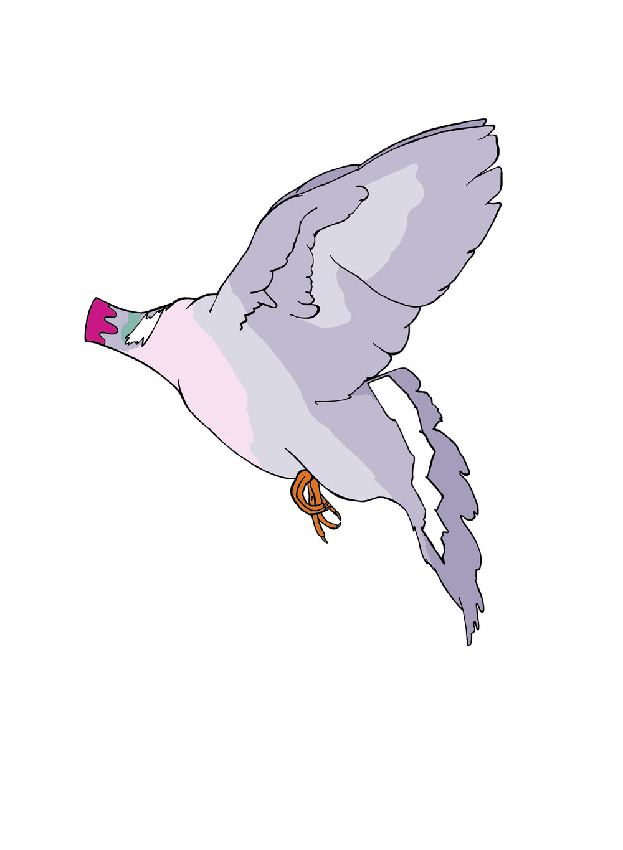 carrier pigeon.jpg