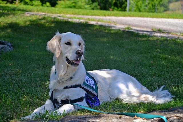 New Doj Advisory Service Animals And >> Lu S Labs Blog Lus Labs