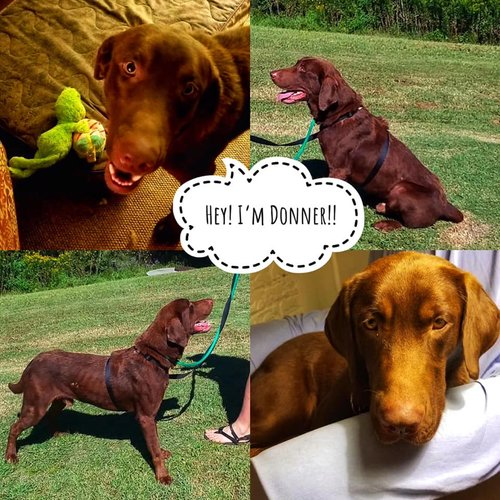 A Day in the Life of Donner the Dog! - Let Him Tell You His