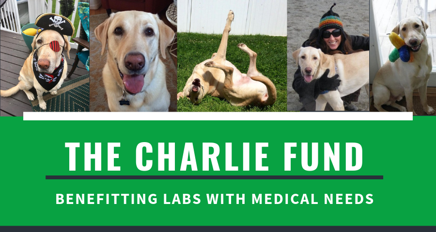 The Charlie Fund.png