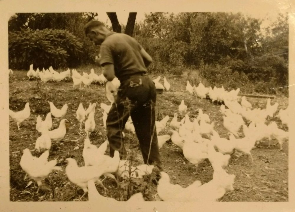 poultry farm.jpg