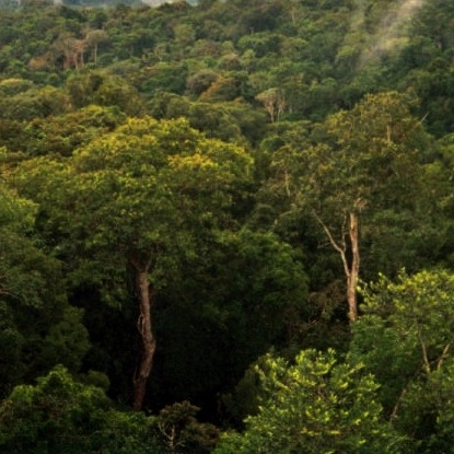 CLIMATE JUSTICE & LAND DEFENSE IN THE AMAZON  -