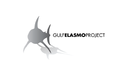 Gulf Elasmo Project