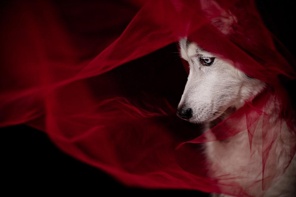 Photo courtesy of Marika Moffitt & Dirtie Dog Photography (used with permission)
