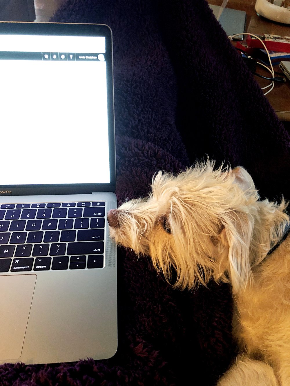 The best working pal