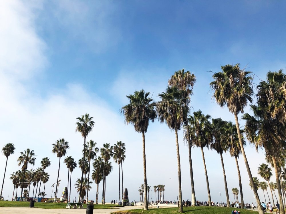 Copy of CA_Venice_PalmTrees.jpg